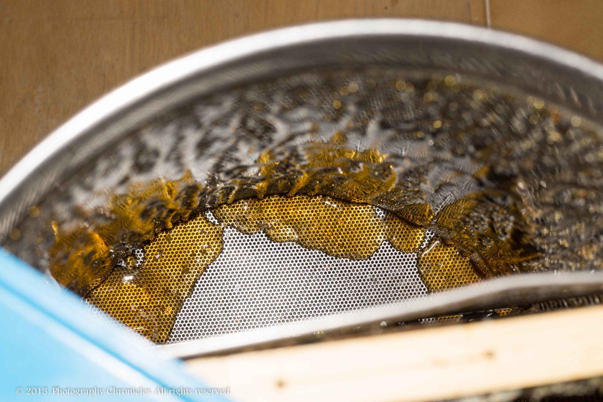 Honey making 10