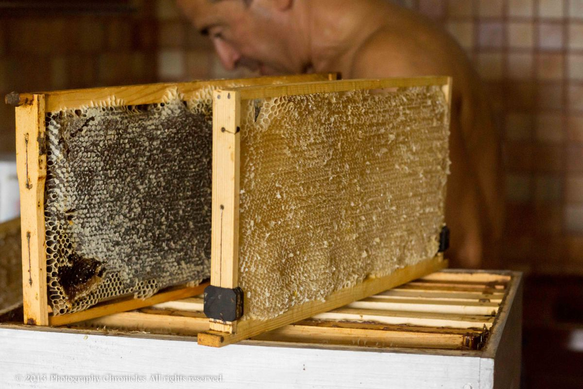 Honey making 3