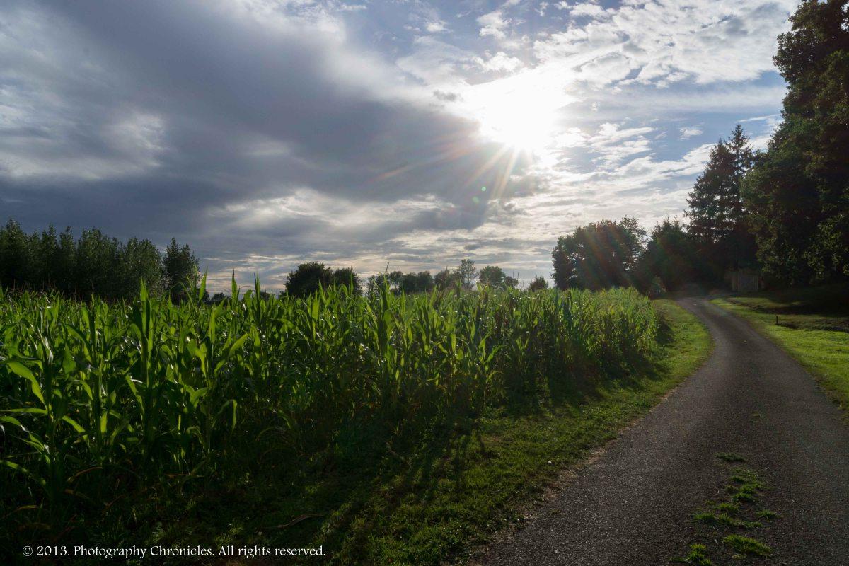 Sunbeams over the crop 2