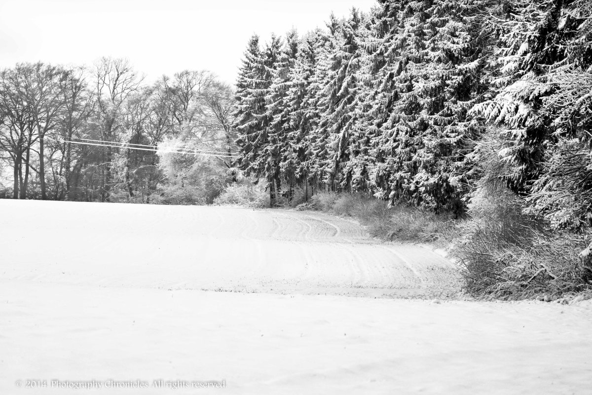 Winter - Day 8