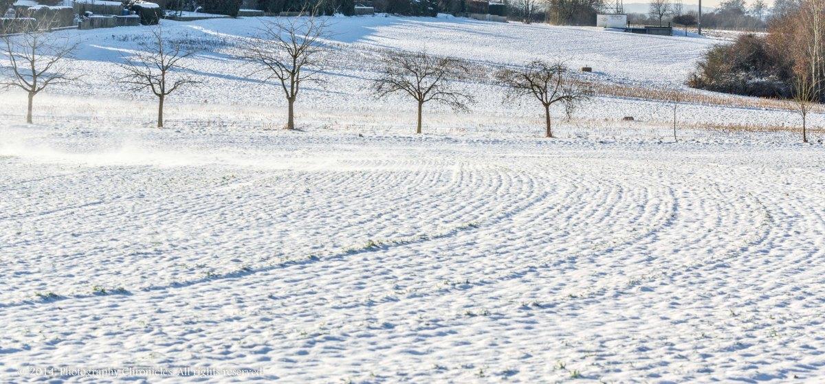 Winter - Day 15
