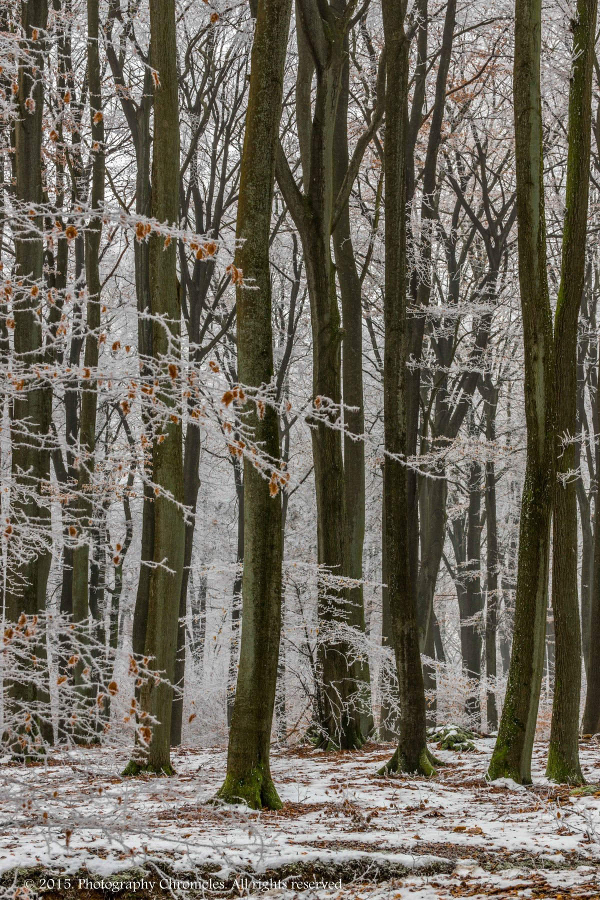 Frozen Forest 4