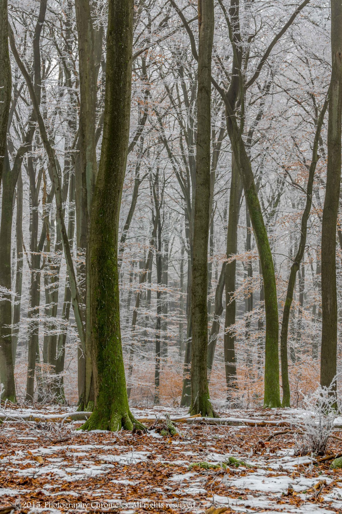 Frozen Forest 6