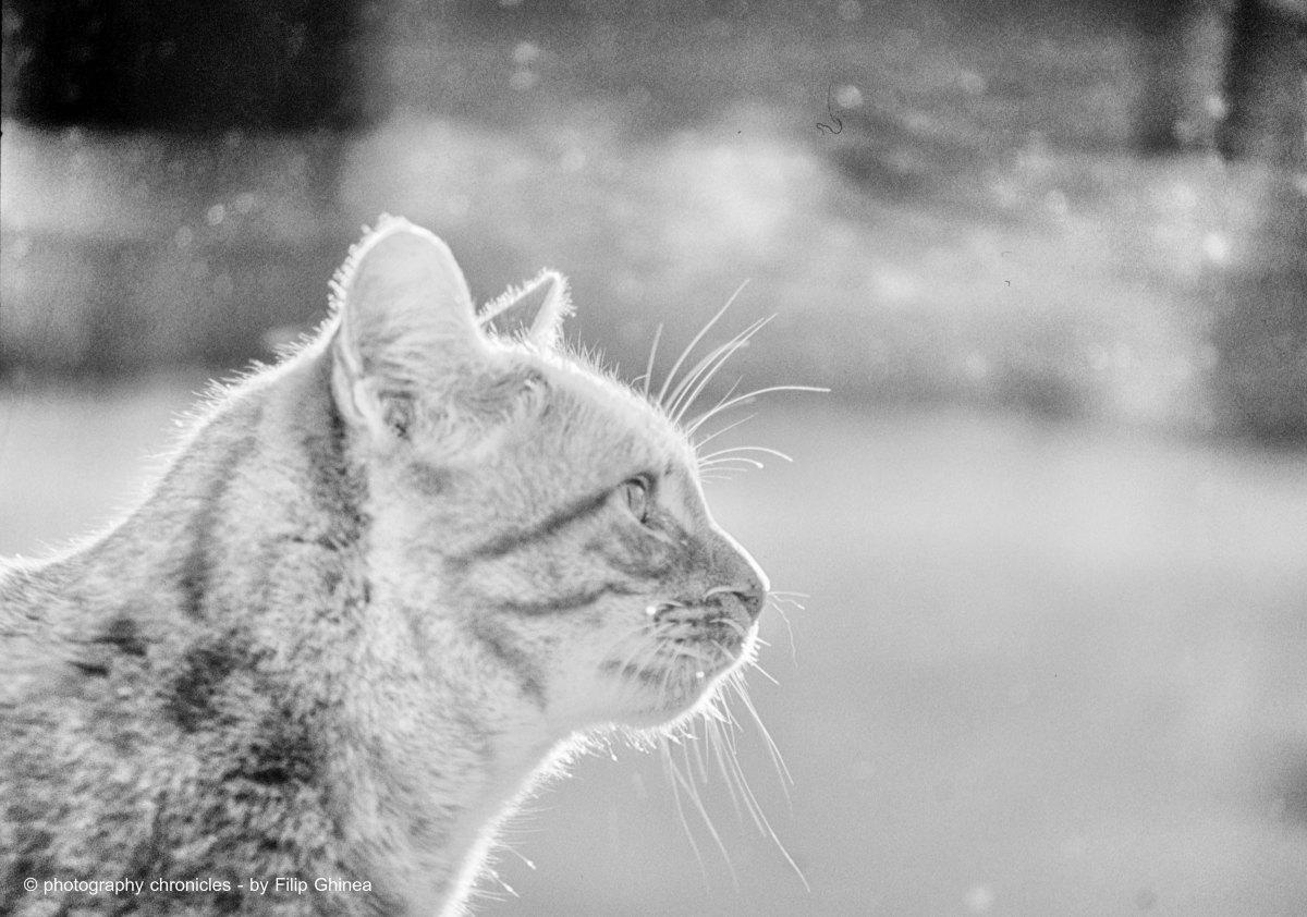 Handsome Cat 1