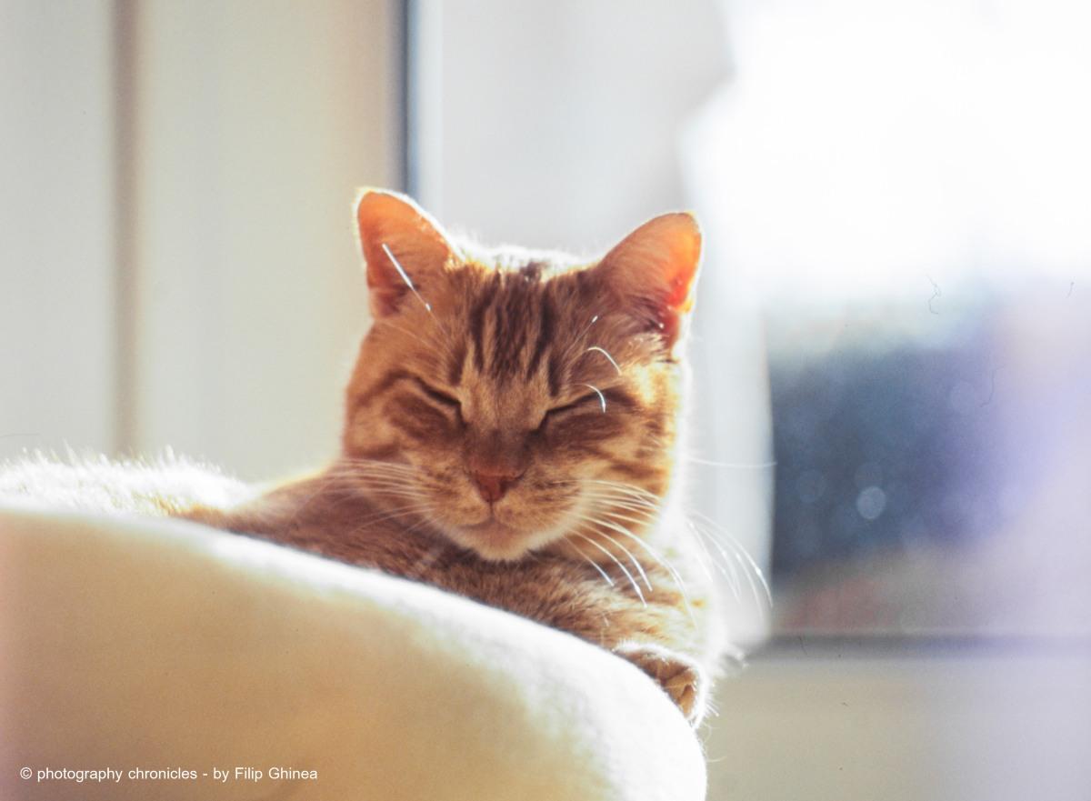 Handsome Cat 2